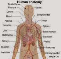 Human Anatomy with Mark of the Beast-Bible Prophecy