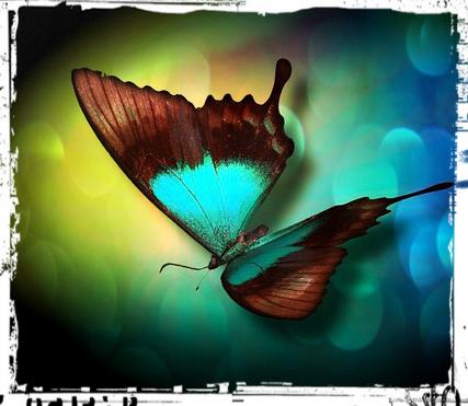 бабочка картинка