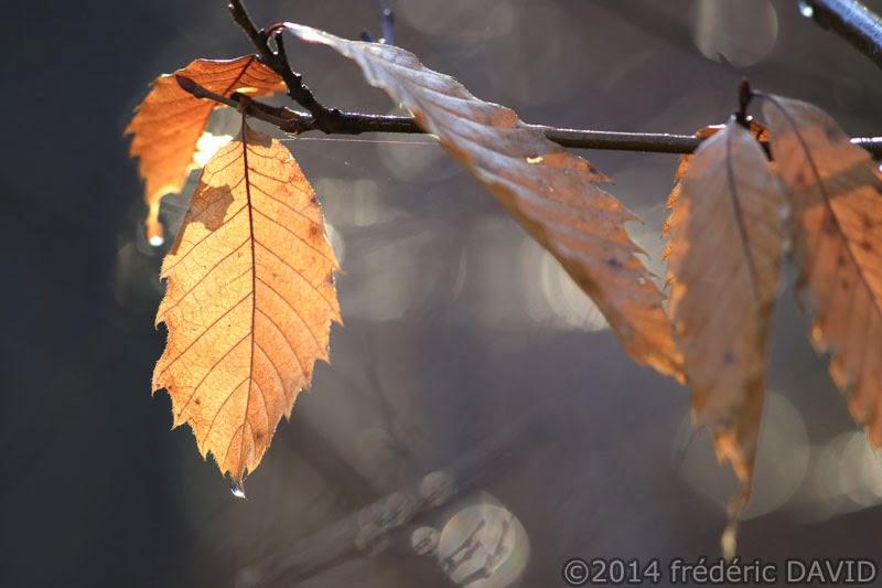 nature végétation feuille automne forêt Fontainebleau Seine-et-Marne