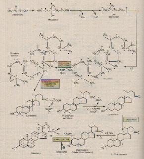 biosintesis steroid pada tumbuhan