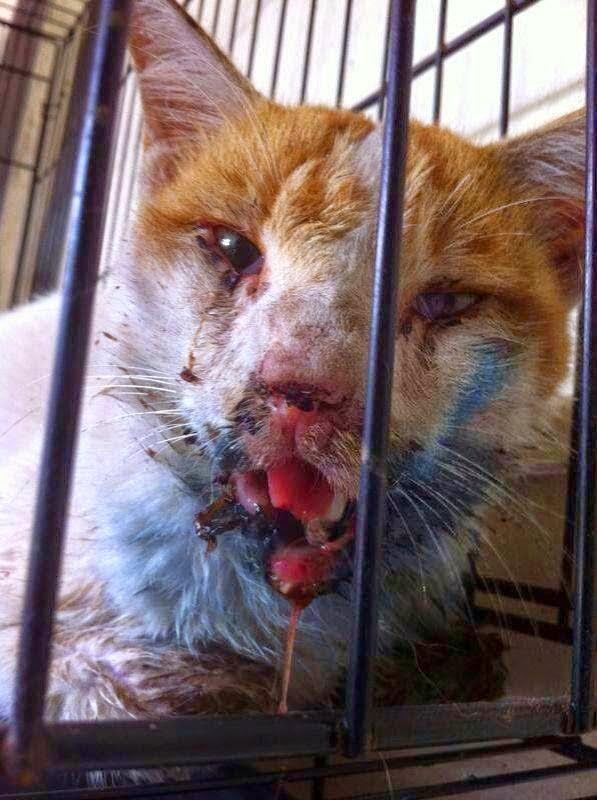 Derita Si Kucing Dipukul Hingga Hancur Mulut Kerana Mencuri Ikan