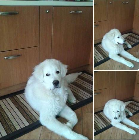adozione cucciolo cane Mestre