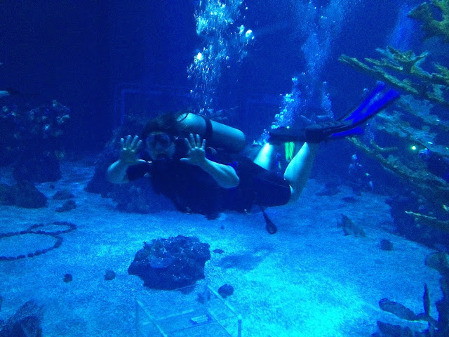 Laura diving in the aquarium at Epcot