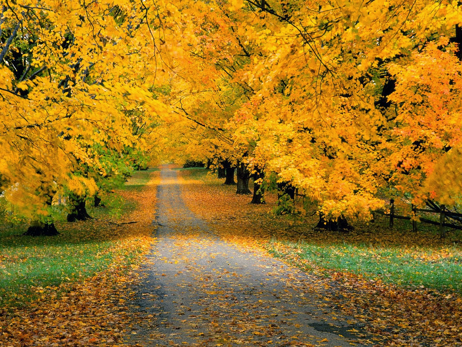 all new wallpaper the beautiful autumn wallpaper for