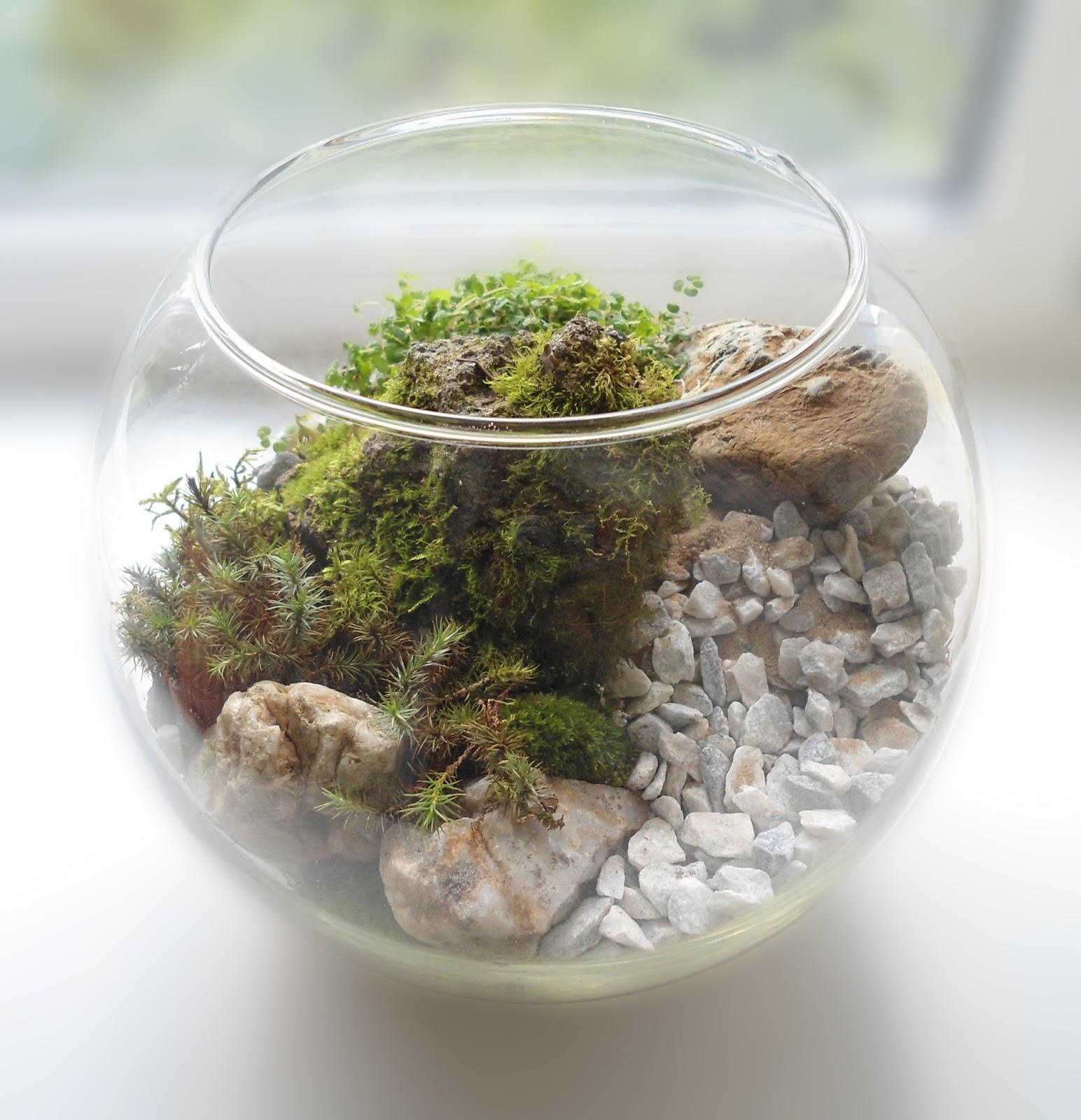 Как сделать флорариум своими руками - Handmade Idea 12