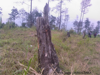 Alam dan lingkungan