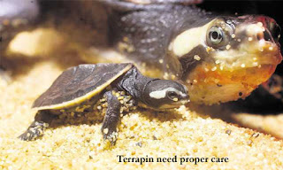 Caring and Feeding for Terrapin