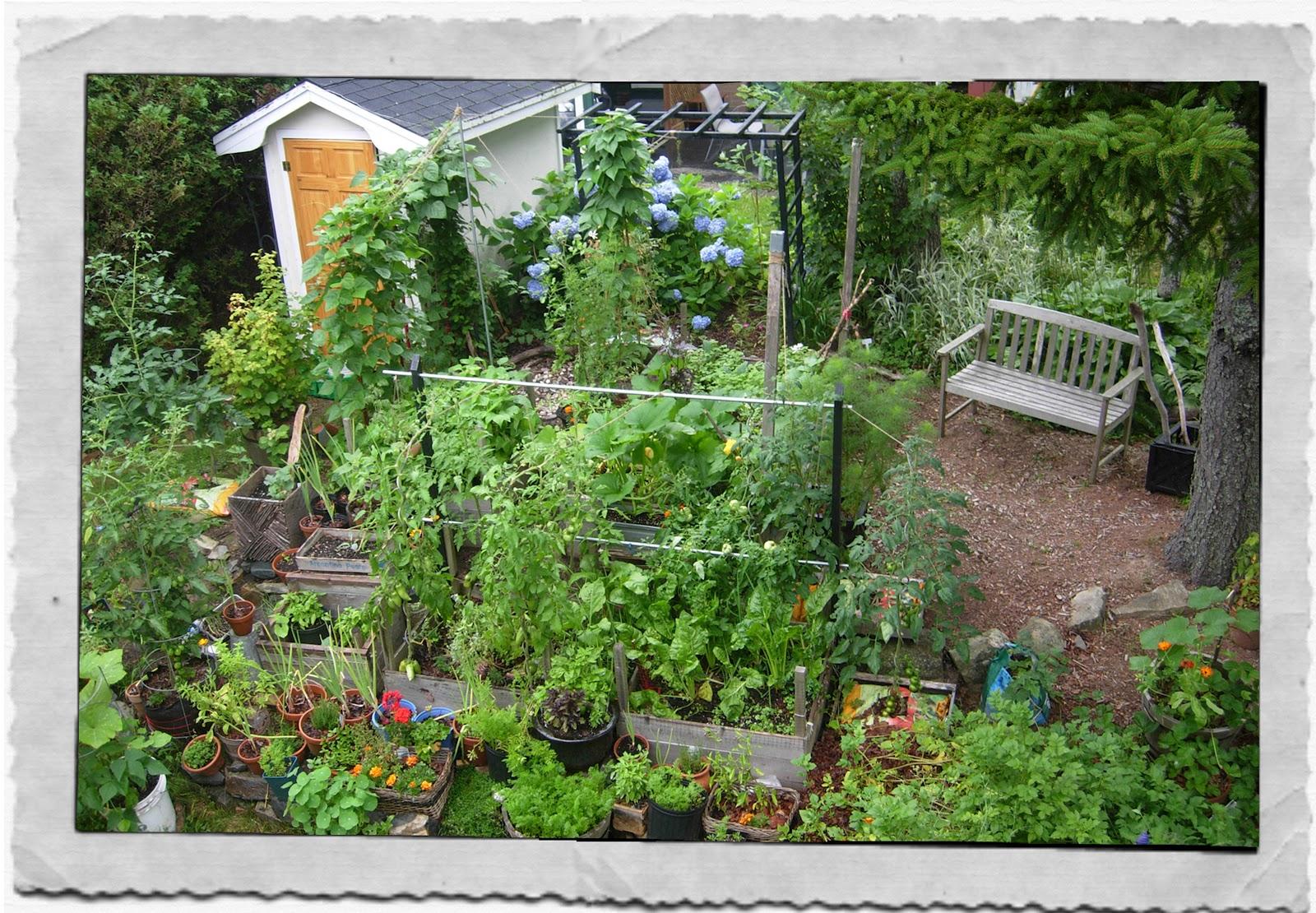 My Kitchen Garden My Kitchen Garden Party