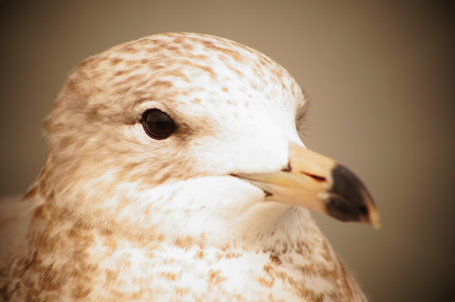 Public domain pictures of a white bird