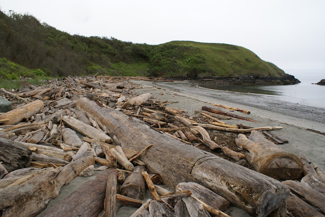 Washignton State beach logs