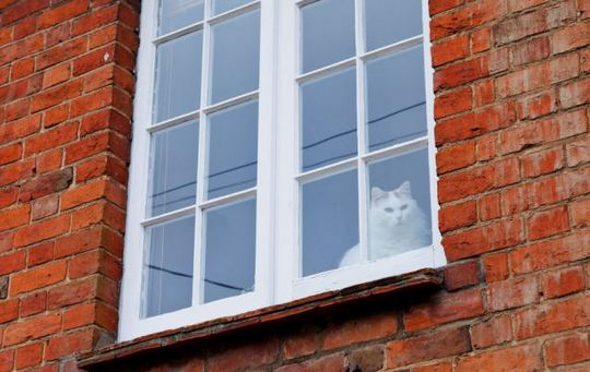 Cat from Wingrave, England