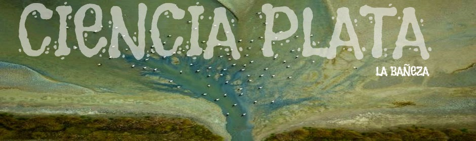 CIENCIA PLATA