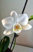 Pierwsze kwiaty