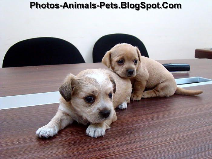 http://4.bp.blogspot.com/-n65-dXsm0ac/Th09HajvPFI/AAAAAAAABrA/LEO2t-t1g8w/s1600/cute%2Bpuppies_0006.jpg