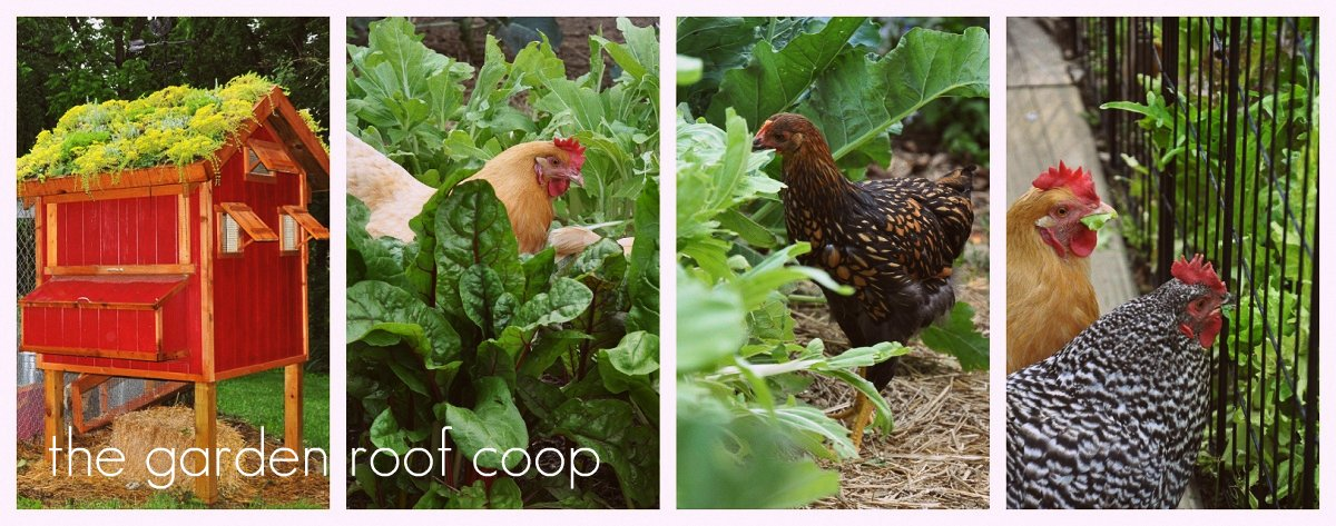 the garden-roof coop