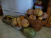 Winter Squash Harvest...