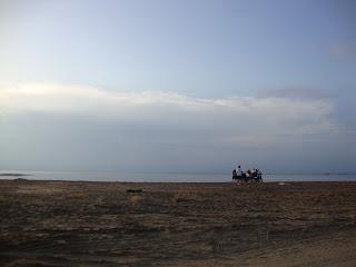 Delta de L'Ebre landscape carriage horses - Sant Carles de La Rápita photo