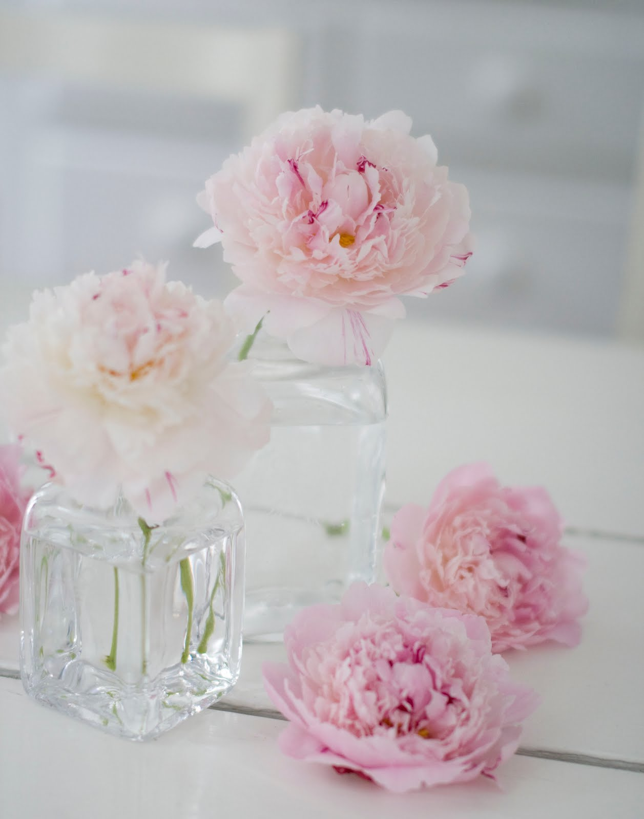 In The Country Pink Peonies