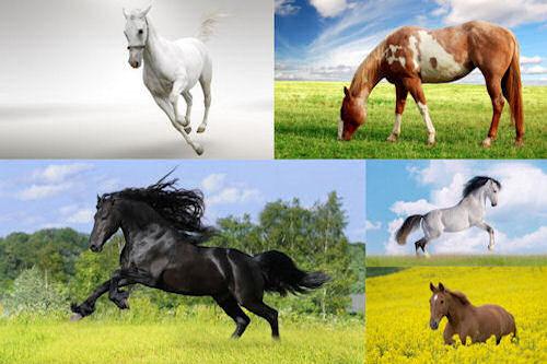 Fotografías de caballos VI (Equinos de Pura Sangre)