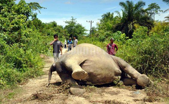 Gajah Mati Kembali Ditemukan di Taman Nasional Teso Nilo