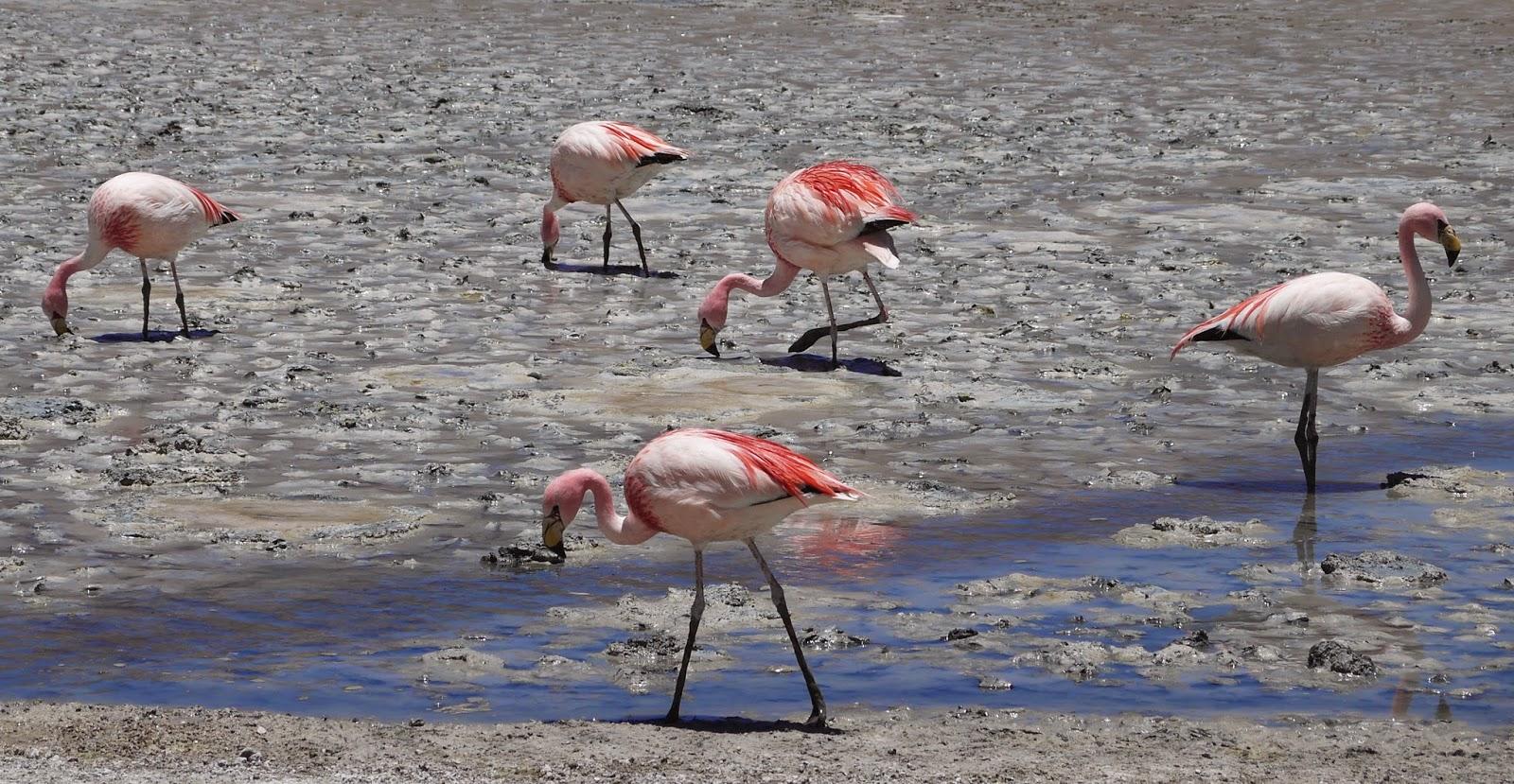 Davidin Geyiği - birinde dört hayvan