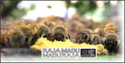 lebah Raja Madu Madu Raja  mengumpulkan pollen