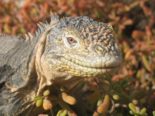 Biota, Endemism, Animals, Reptile