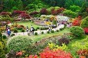 เทศกาลดอกไม้ที่สวน The Garden of Morning Calm