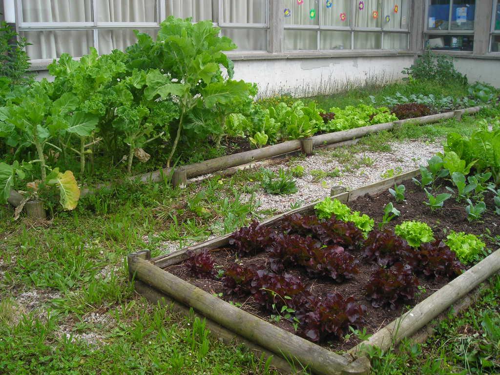 Diciembre 2012 cuidado de plantas revista de cuidado - Cuidado de jardines ...