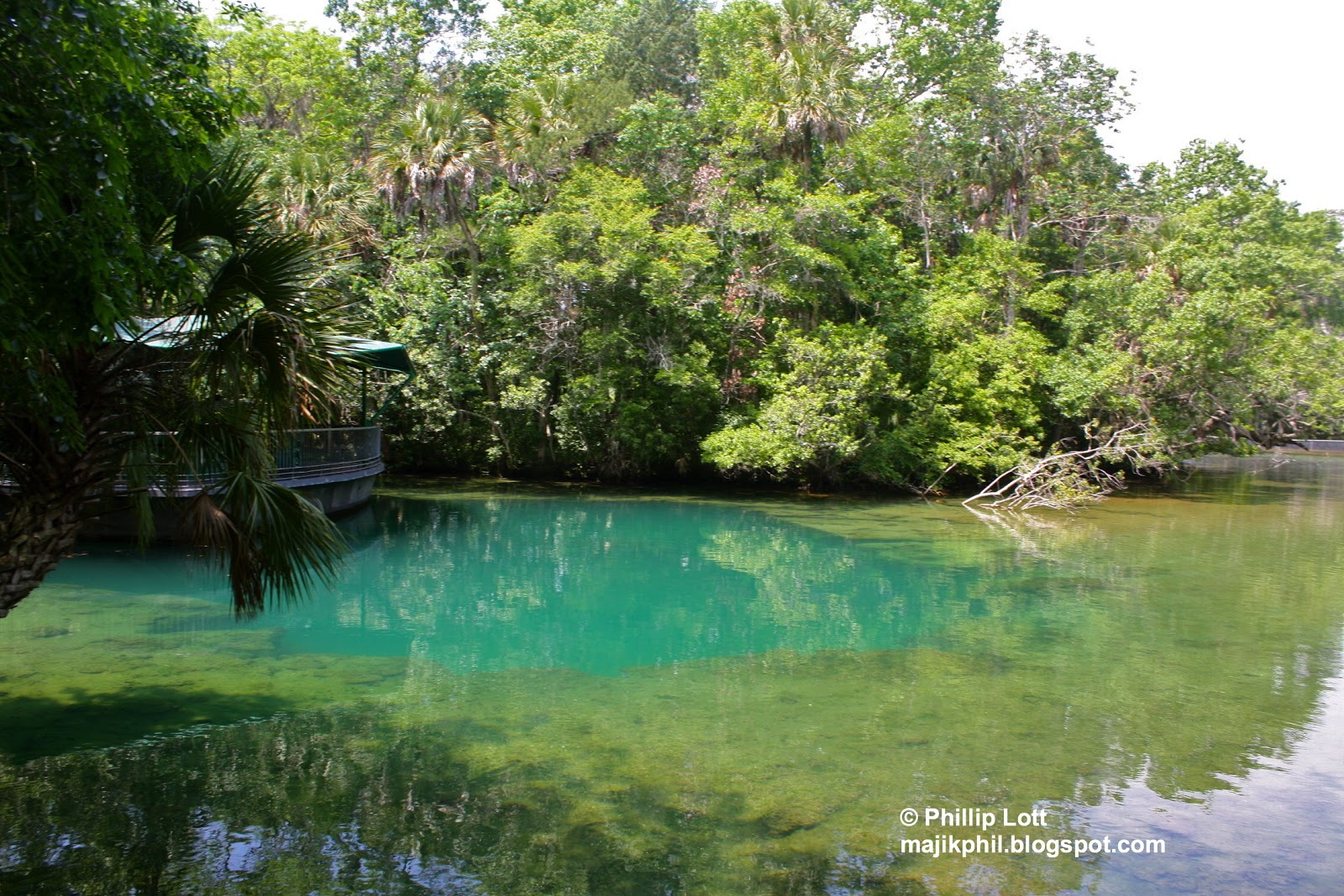 homosassa springs Homosassa springs tourism: tripadvisor has 3,361 reviews of homosassa springs hotels, attractions, and restaurants making it your best homosassa springs resource.