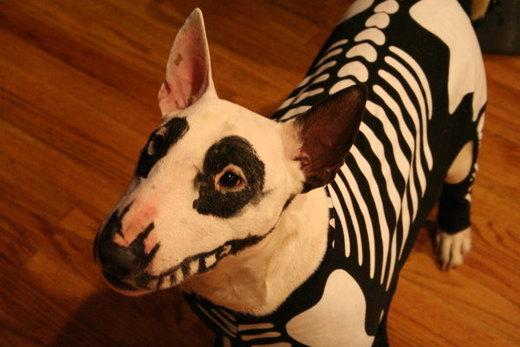 Icky's Halloween Costume 2007 por DianaArtimis