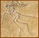 Los fósiles