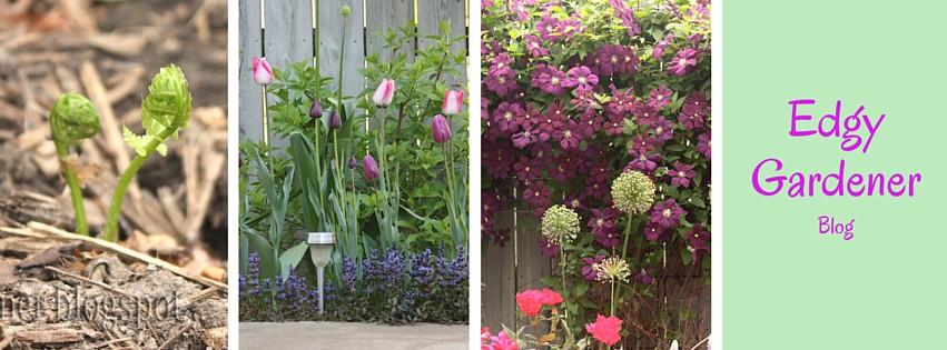 The Edgy Gardener Blog