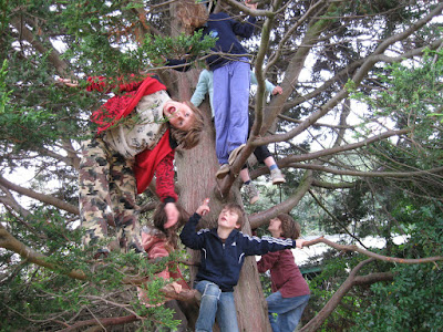 benefits of climb trees to the brain, benefits of, climb trees, brain