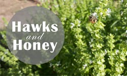 Hawks and Honey