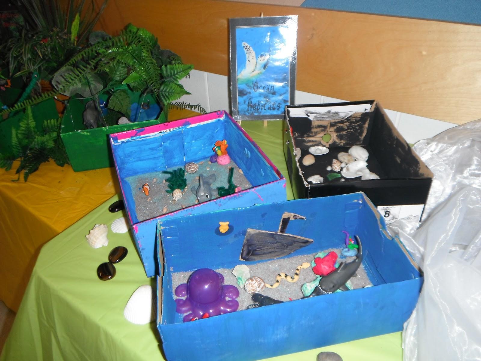 Life At Sses Mrs Poloskis Grade 4 Habitats