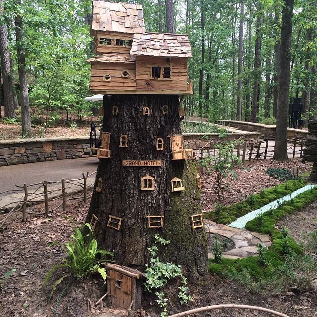 Jeffco gardener what to do with a tree stump by donna duffy for Tall tree stump ideas