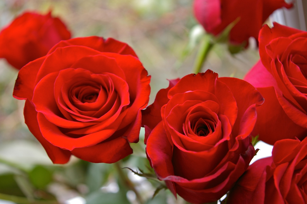 Deerey me!: Everything's coming up roses1280 x 851 jpeg 181kB
