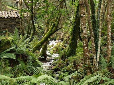 Gran vegetación entre los molinos del Eco-Museo