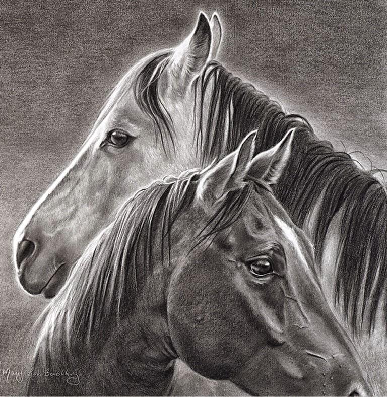 cuadros-de-cabezas-de-caballos-dibujos-lapiz