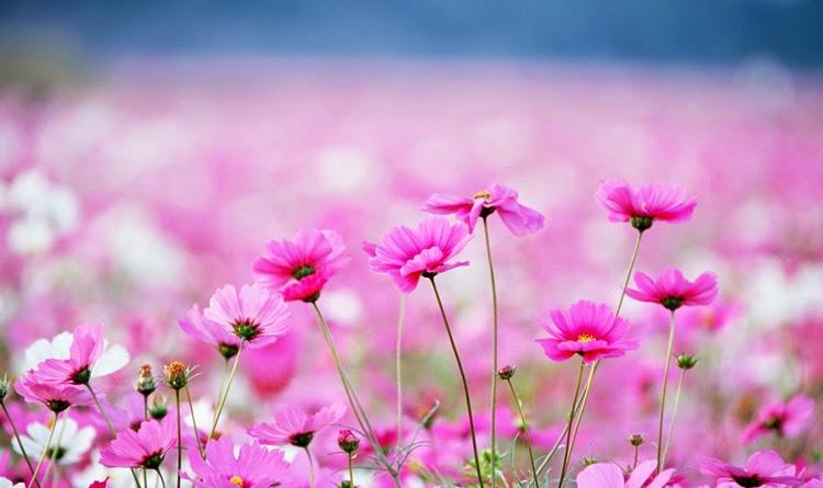 Đời Hoa và Đời Người