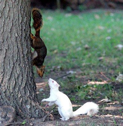 Squirrel Breeding