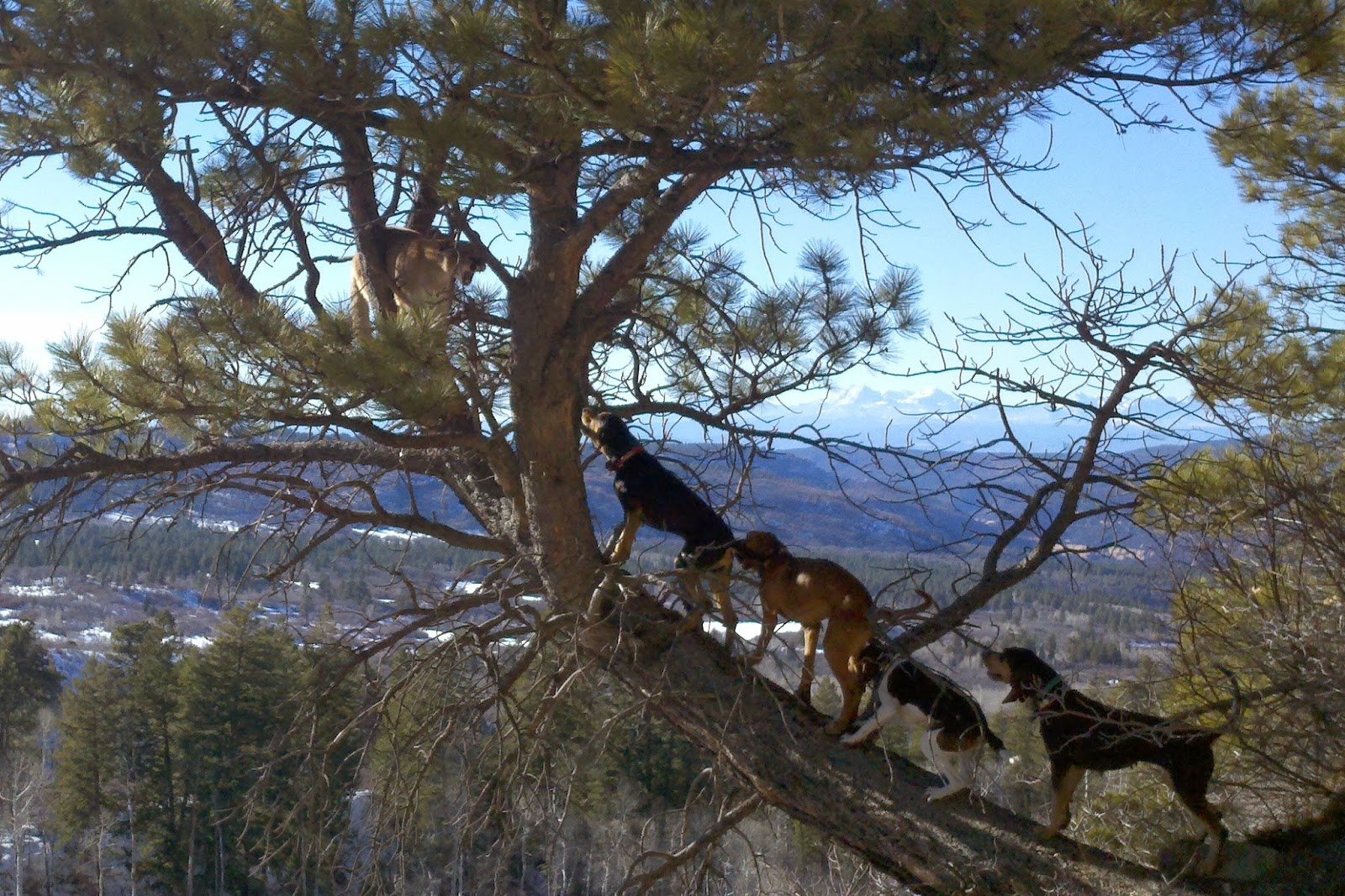 Lion Hunting Dog