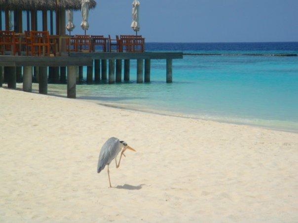 veligandu island resort maldives