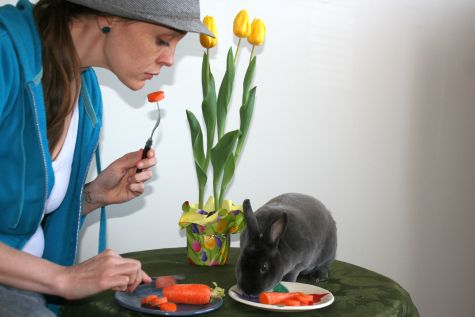 international carrot day, bunny eating carrot