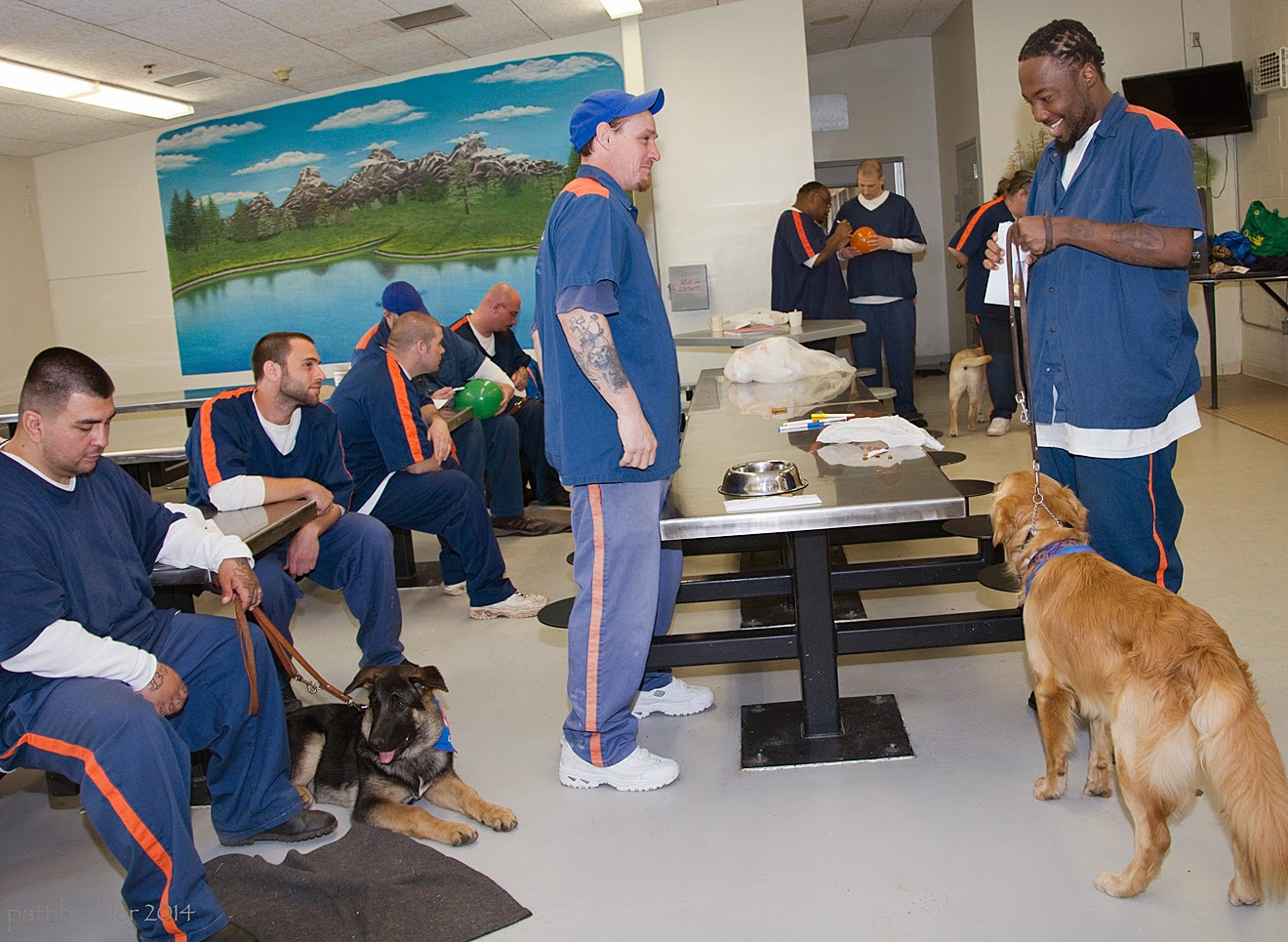 There are five men sitting on the lunch table stools to the far left. They all wear the prison blue uniforms. The first man has a german shepherd puppy lying at his feet. Two men are standing opposite each side of a long lunch table. The man on the far right is african american and he is holding the leash of a golden retriever puppy, who is standing and facing theman. There are three men in the far background. There are plastic bags on the table and a stainless steel dog dish. There is a wall-sized mural in the background on the left, a paining of a mountain lake scene.