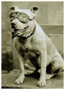 Horatio's Trusty Dog Bud