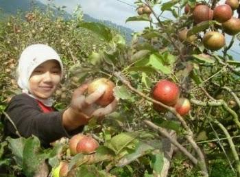 Kusuma Agrowisata Malang