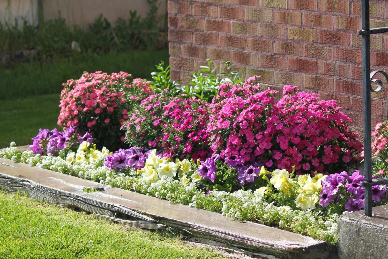 Цветы для посадки в саду