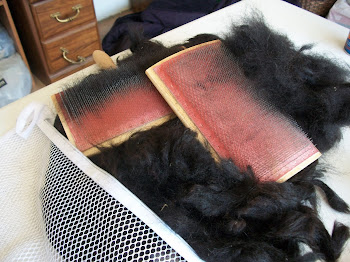 Carding turns clean raw fleece (Kardigan's) into...